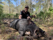 Giant Hog Hunts in FL