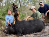 Hog Hunt with Dogs