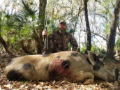 Hog hunting in Florida