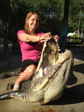 Naples Alligator Hunts