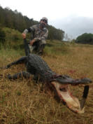 South Florida Alligator hunts